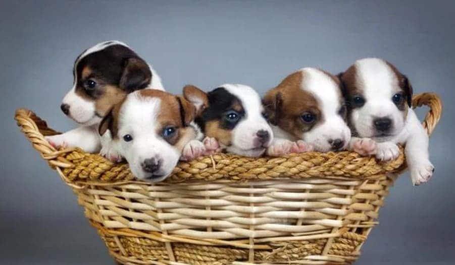 Советы при покупке щенка